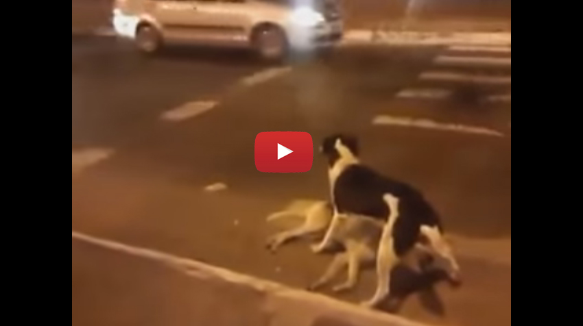 amazing_world-dog-saves-his-friend