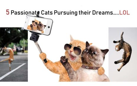5 Passionate Cats Pursuing their Dreams…..LOL