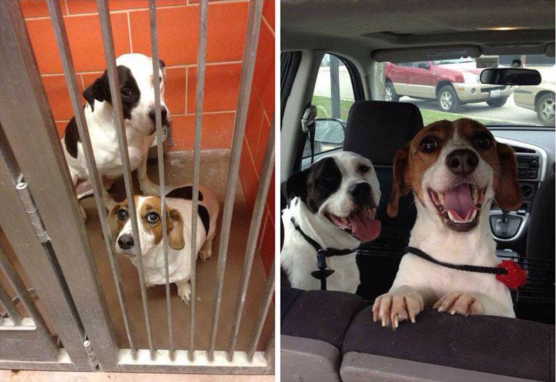 best buddies adopted