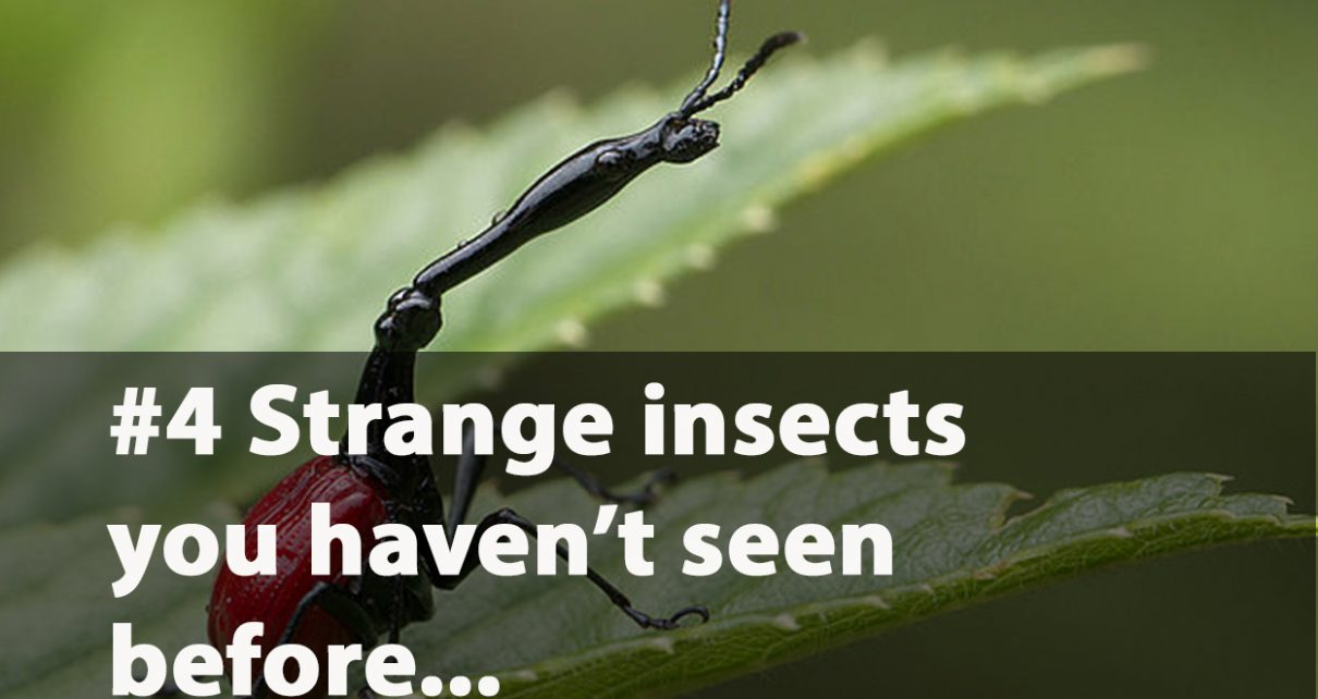 Strange and unique insects