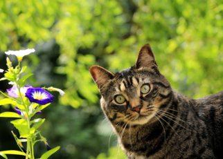 Cat amzwold